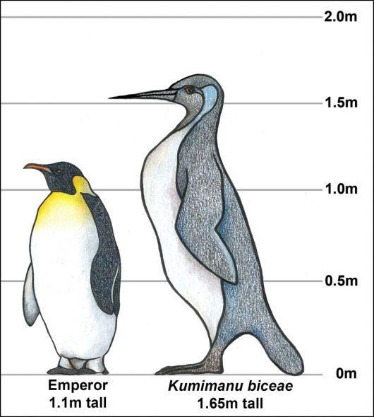 Penguin illustration Tess Cole