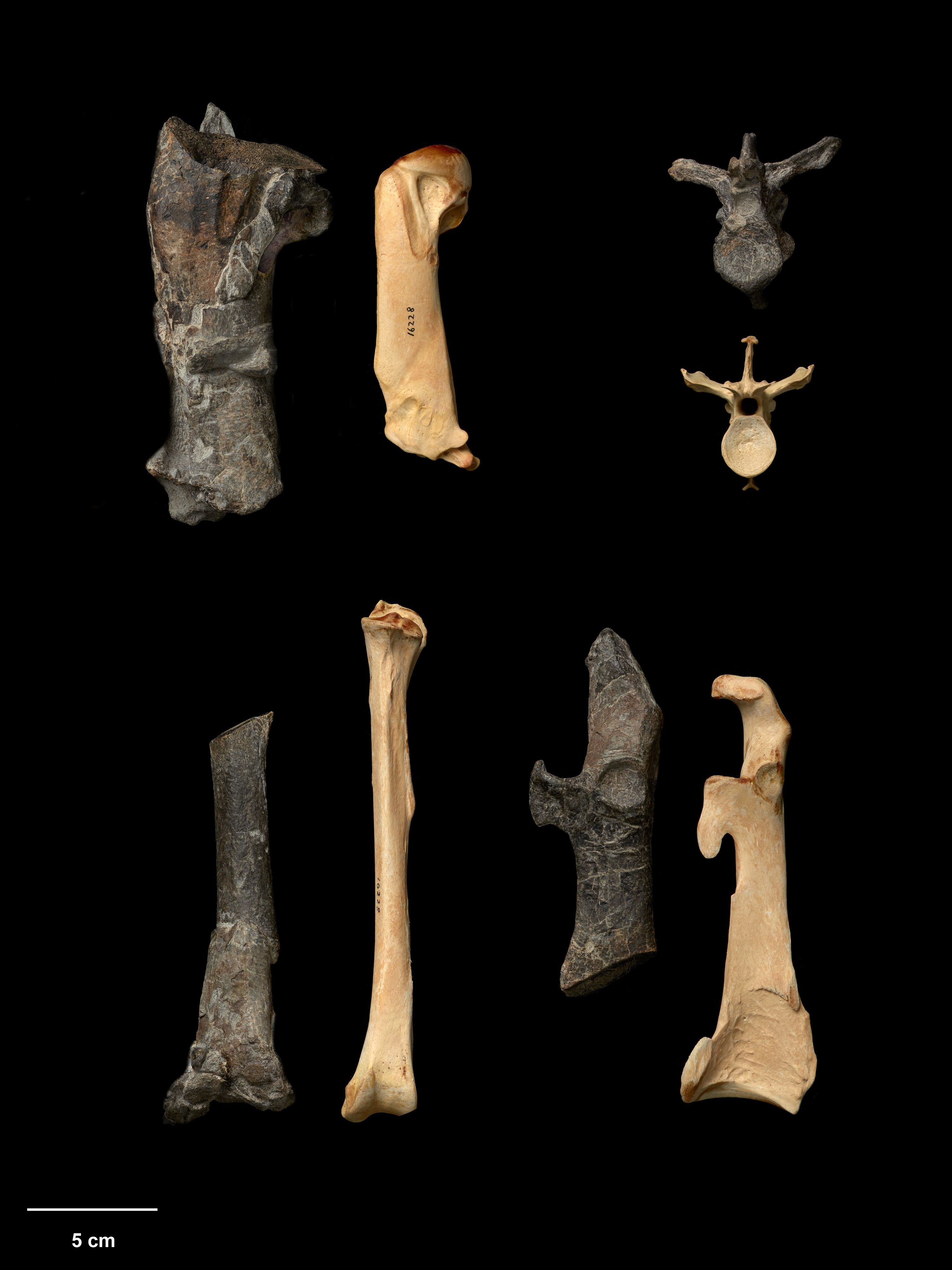 An array of bones