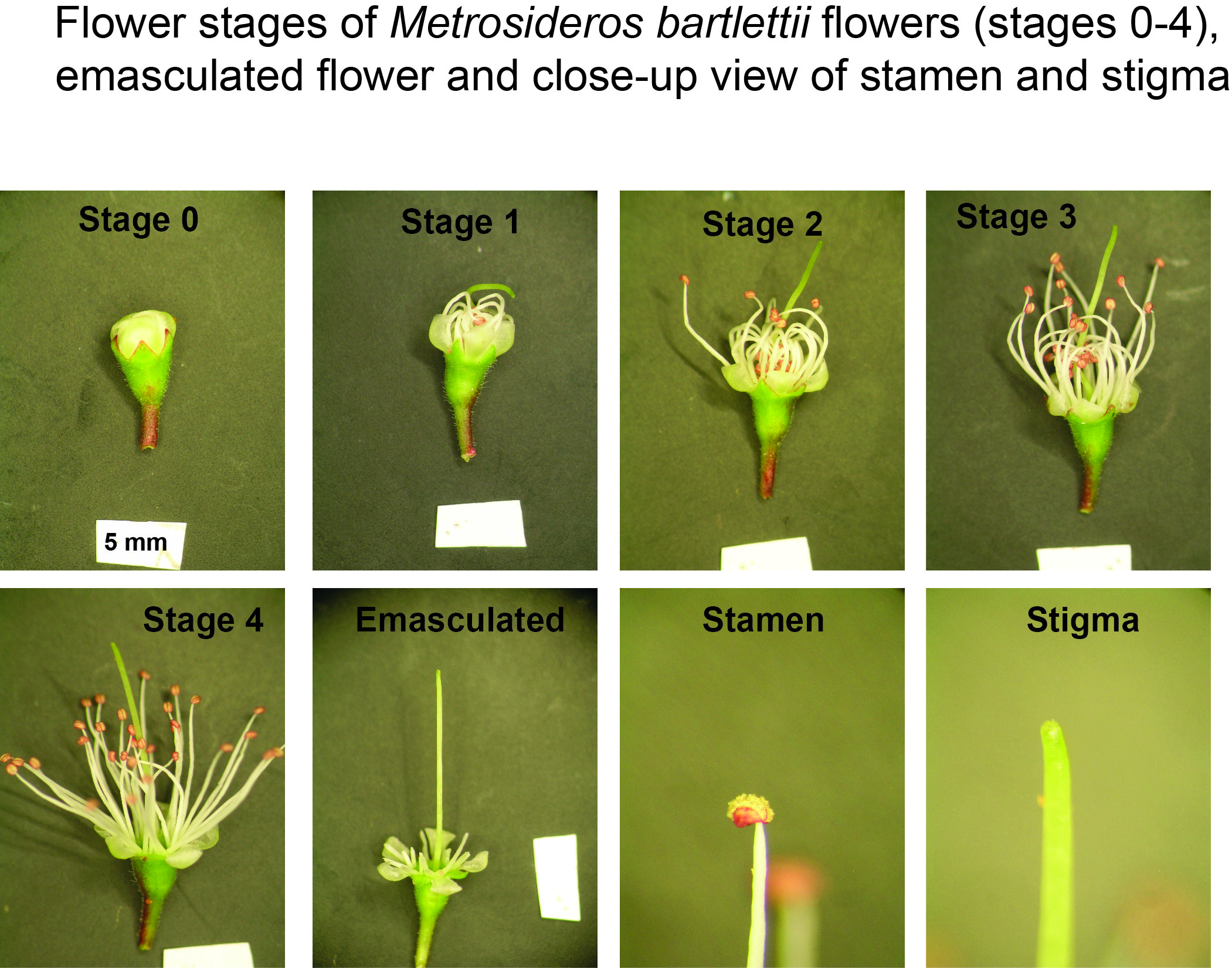 flowering stages2