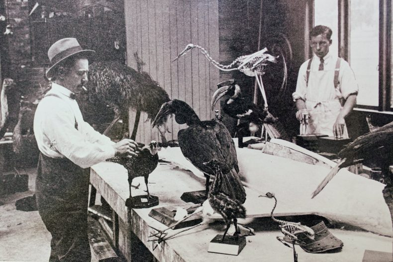 Two people working on specimens in the museum while smoking