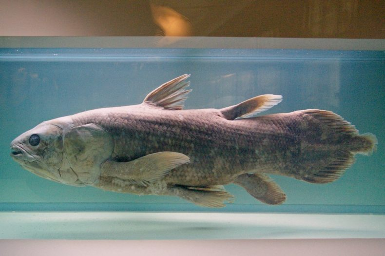 Fish on display at a museum