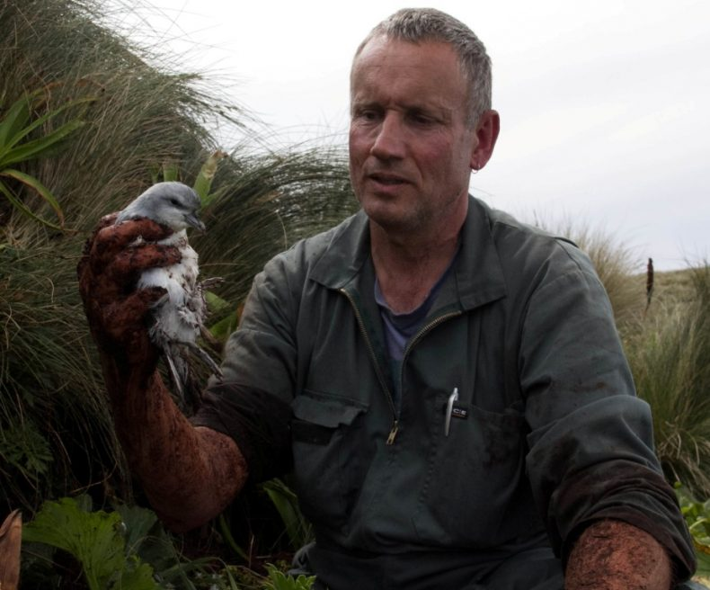 Colin Miskelly with a lesser fulmar prion chick extracted from a muddy burrow, Disappointment Island. Photograph by Kevin Parker. Parker Conservation