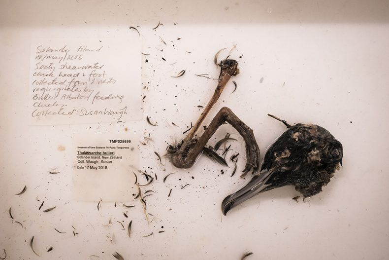 Contents of the jar, including a bird's head and foot
