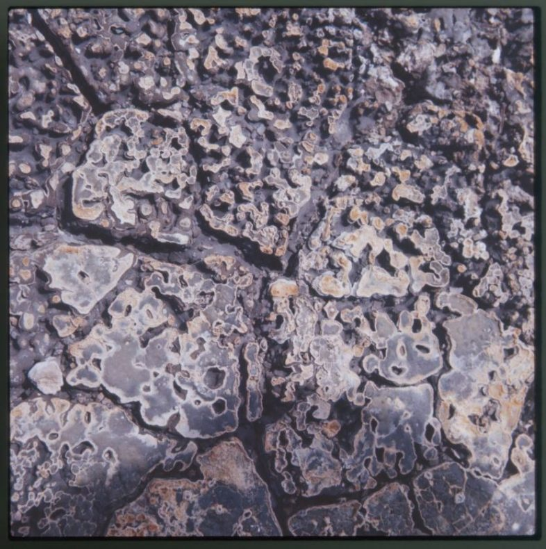 Untitled [Dried mud], circa 1966, by Theo Schoon. Purchased 2001 with New Zealand Lottery Grants Board funds. Te Papa (CA000812/001/0022/0001)