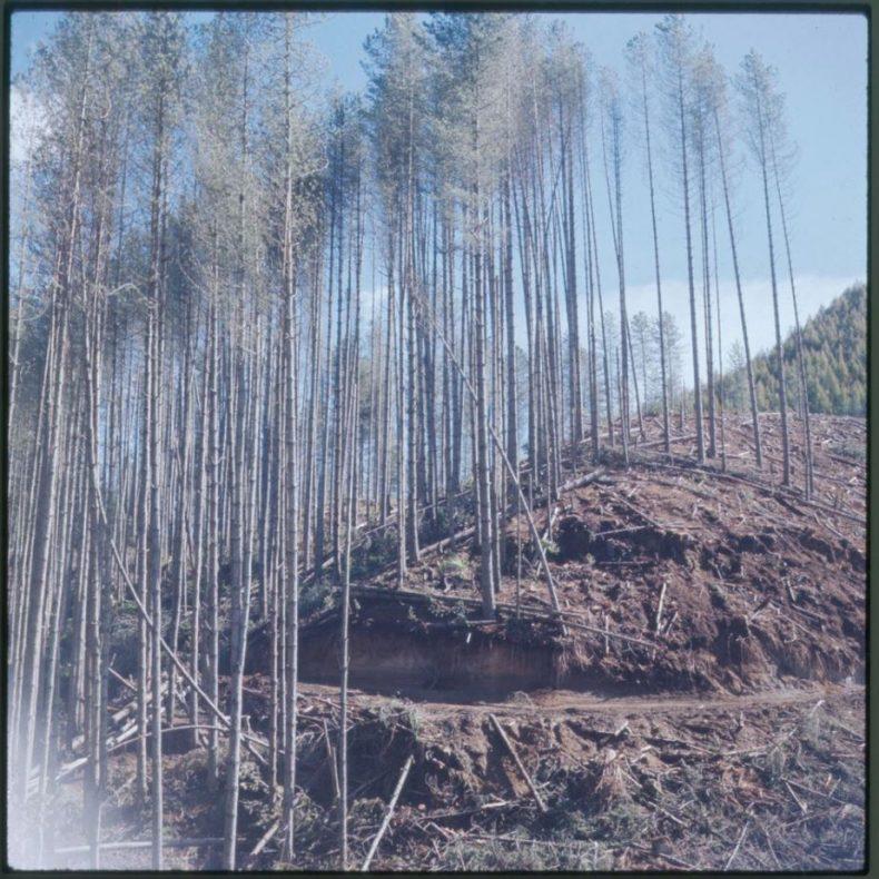 schoon-trees-tepapa