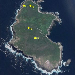Map of Rangatira Island showing locations where blog images were taken. S = weevils feeding on speargrass, H1 = hoho tree near the hut, H2 = weevil site on summit track, H3 = weevil site in Kokopu Creek catchment.