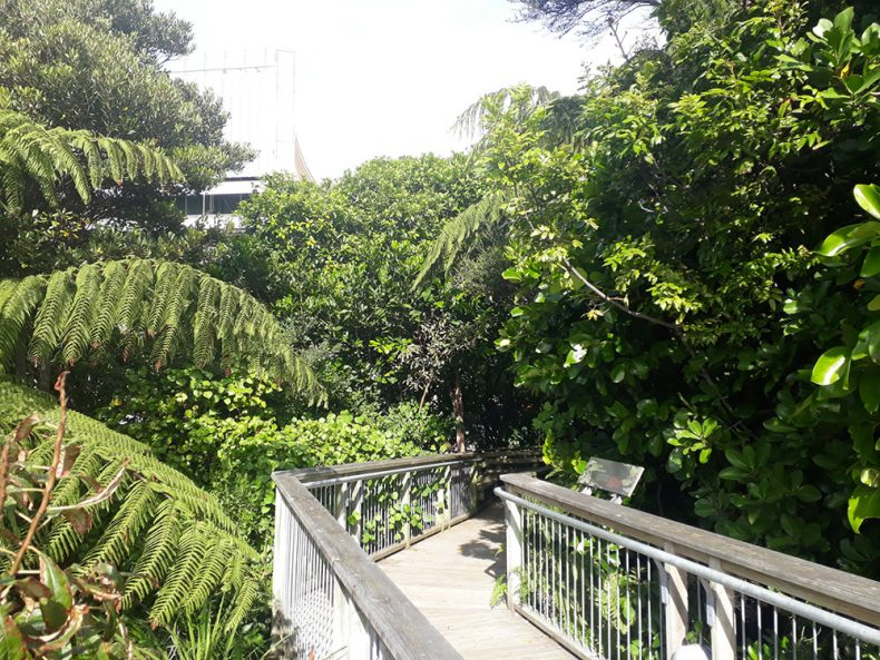 Diverse variety of bush and a bridge pathway through it
