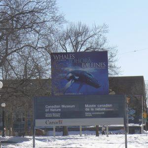 Whales Tohora Baleines sign Ottawa 2012. Photographer Pat Stodart Te Papa