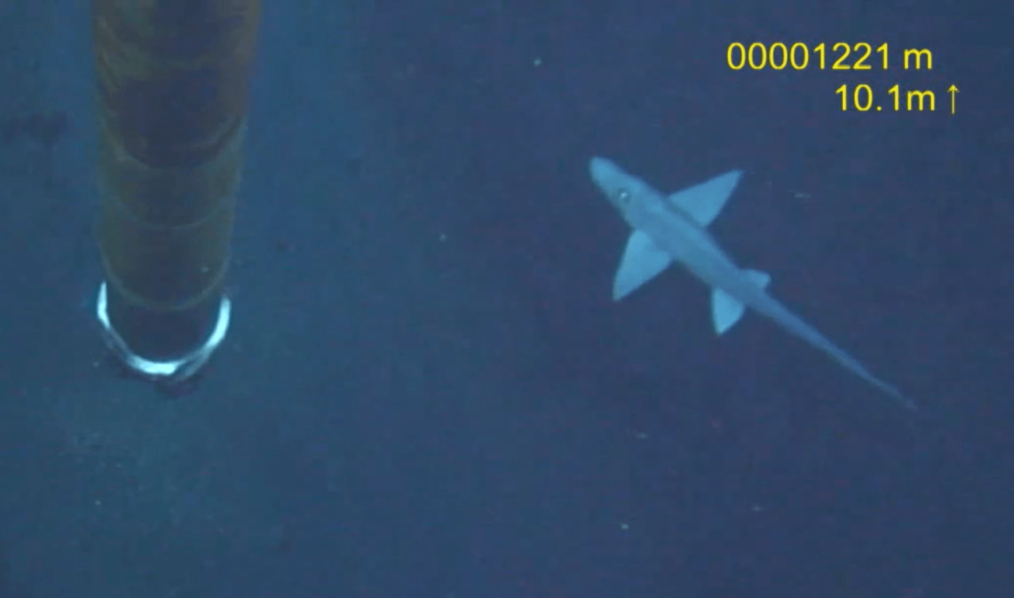 Ghost shark caught on camera