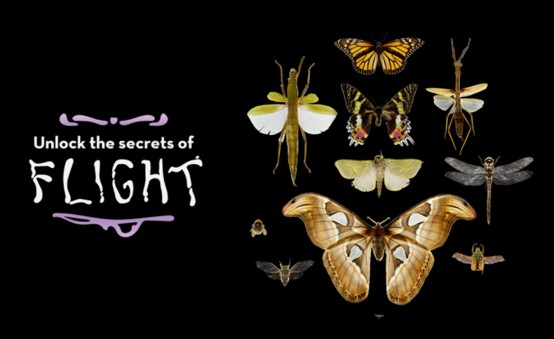 Different sized insects on a digital label with the words 'the secrets of flight'