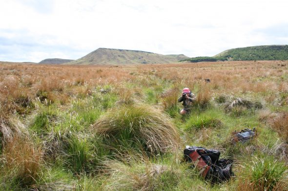 Kerry Ford photographing an interesting sedge in the bog. Photo by Heidi Meudt @ Te Papa.