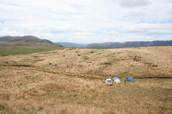Our camp in the red tussock fields near Reporoa Bog. Photo by Heidi Meudt @ Te Papa.