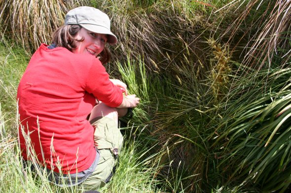 Jessie showing where another plant of Myosotis tenericaulis is hiding in Reporoa bog. Photo by Heidi Meudt @ Te Papa. WELT SP106558.