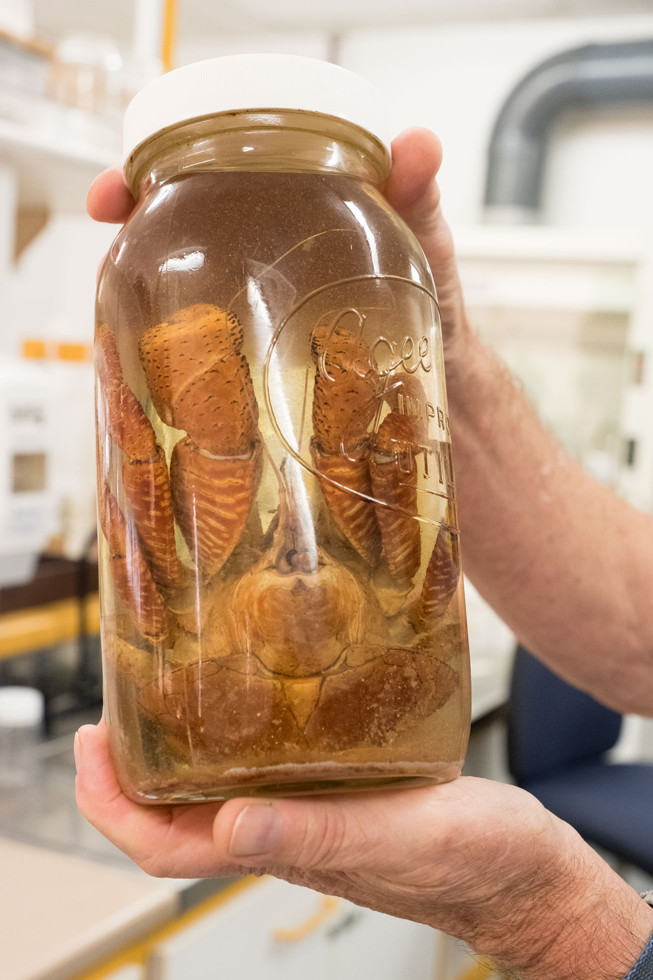 Man holds crab specimen in big jar