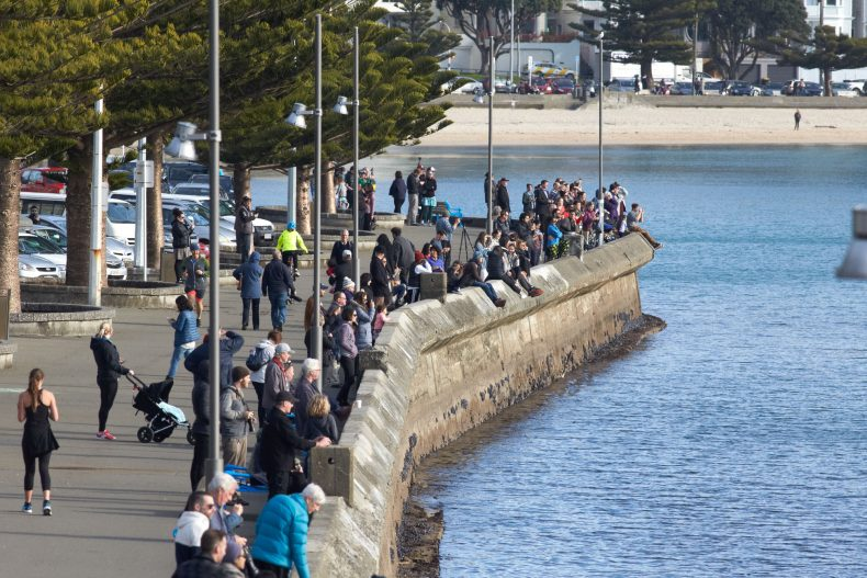 People line the waterfront at Oriental Bay to catch a glimpse of the whale