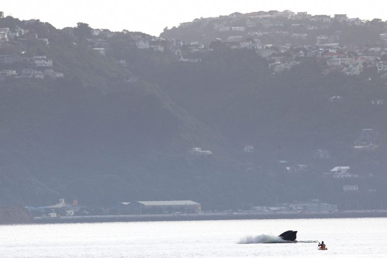 Whale breaches the water right beside a kayaker