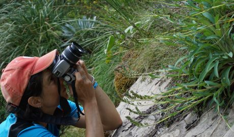 Heidi Meudt taking some close-up photos of a large plant of Myosotis macrantha in the Matiri Range, Kahurangi National Park. Photo by Ant Kusabs @ Te Papa. SP106587