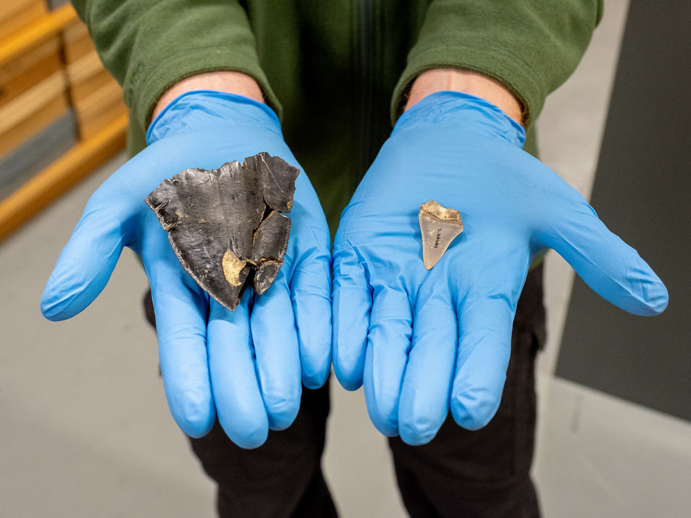 Megalodon tooth and great white shark tooth held in hand
