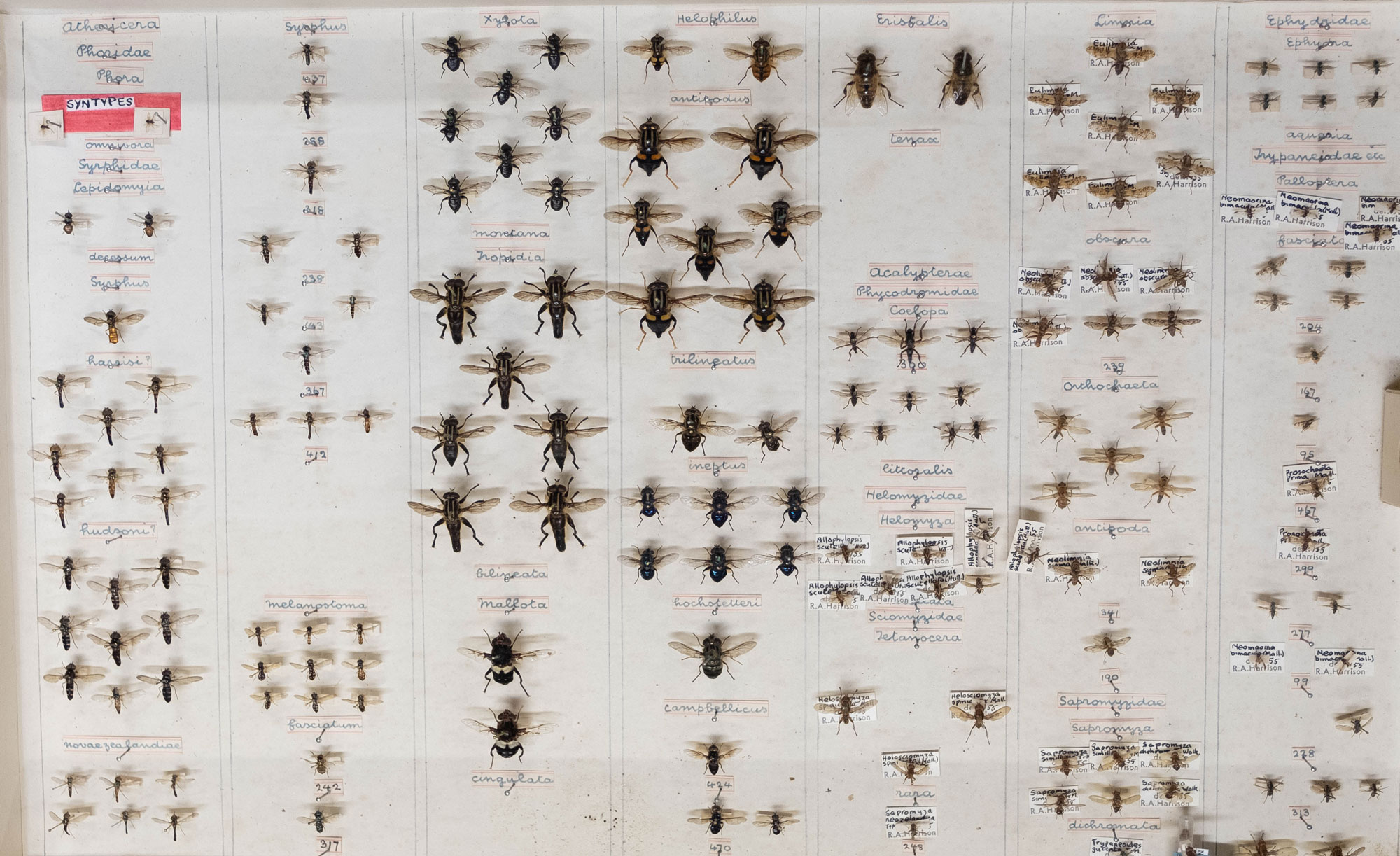 A selection of mounted flies