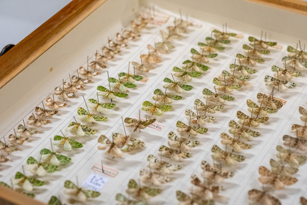 Moths from the Hudson Collection