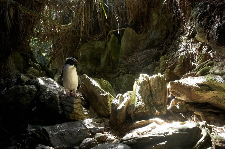 A penguin stands on a rock with bright light from above illuminating the scene