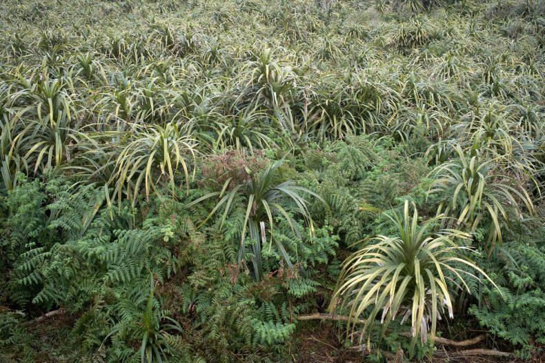Dense bush