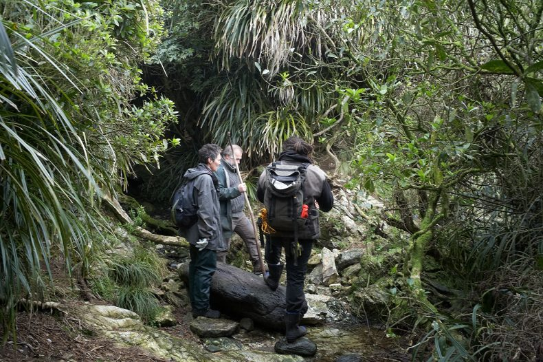 A woman and two men stand near a stream surrounded by bush