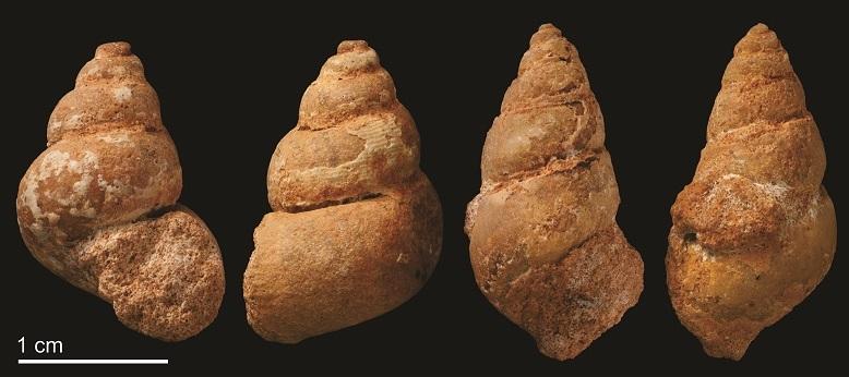 Beni Saf snails 1