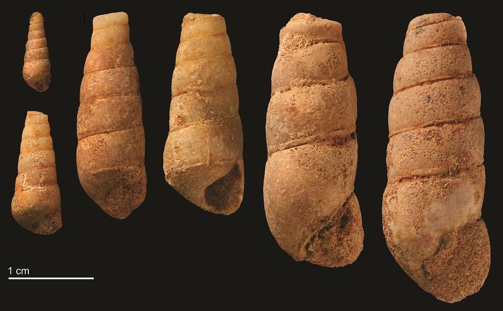 Beni Saf snails 2
