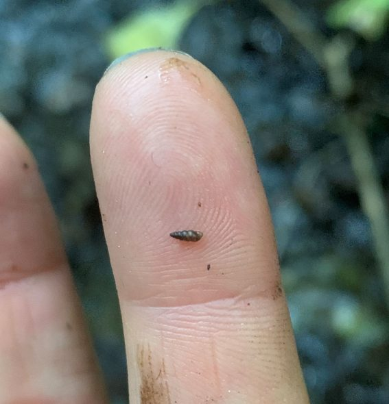 Finger with a tiny snail on it