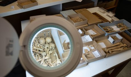 Bones sorted into boxes