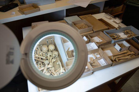 Bones sorted into boxes