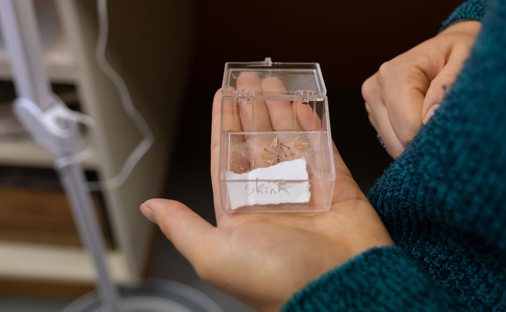 Hands hold tiny bones with a label that says 'skink'