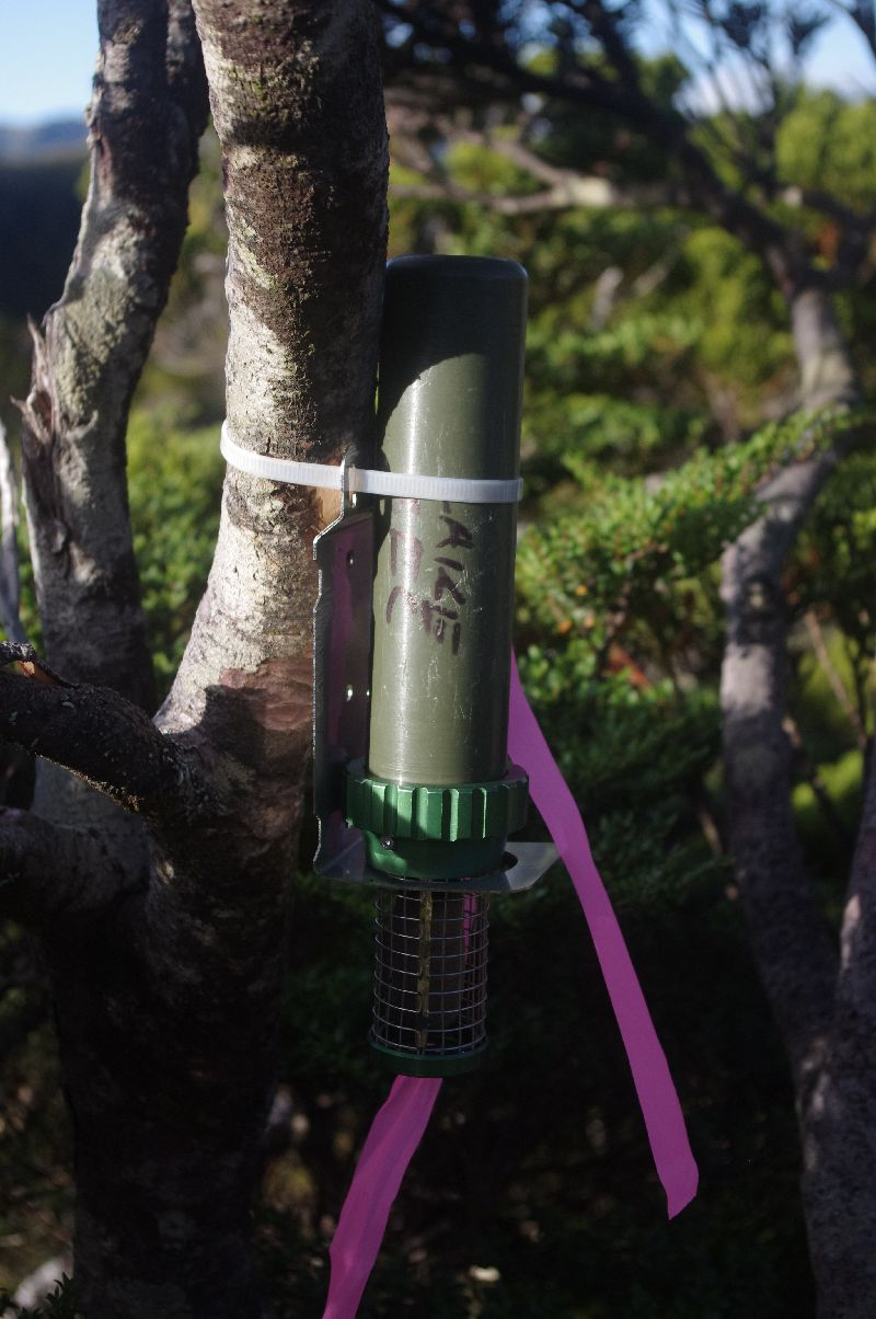 A green pipe attached to a thin tree trunk by white plastic cable tie and a pink ribbon marker. Green bush and blue sky in the background.