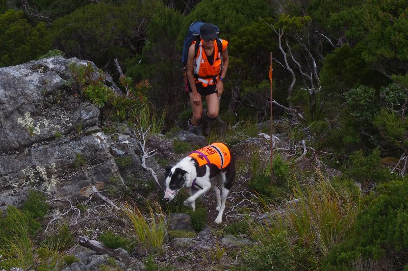 A woman wearing shorts and a high-visibility vest is carrying a pack up stony and grassy terrain. Near her is a brown marker stick with an orange flag. There is a black and white dog in the foreground wearing a high-visibility vest.