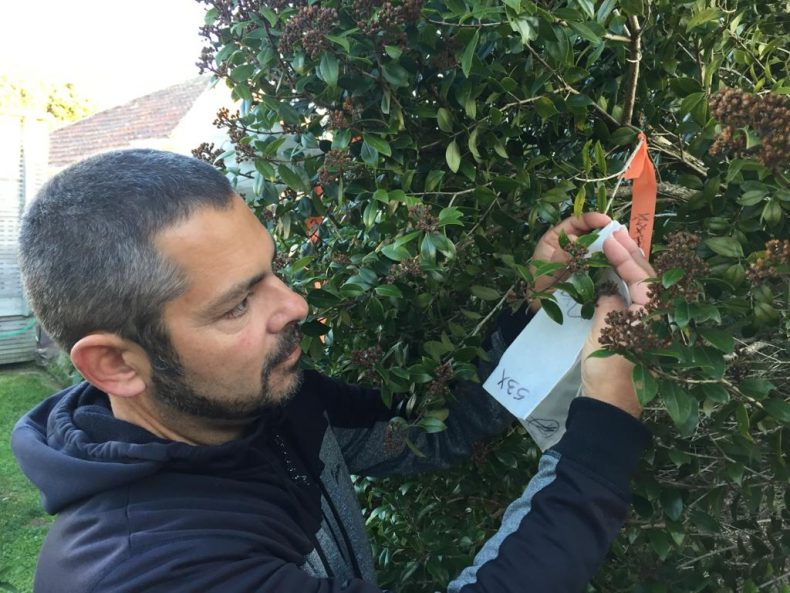 Man with a beard and blue sweatshirt putting paper tags into a hedge