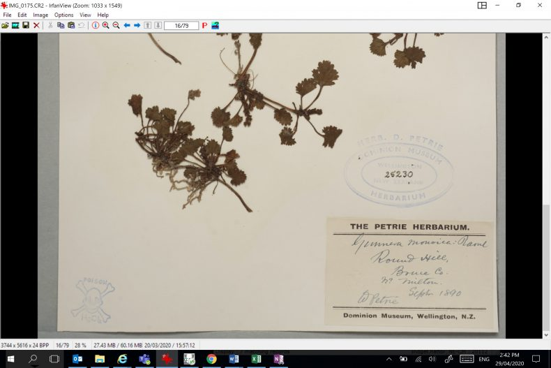 Computer screenshot of a photo of a scientific record for a plant