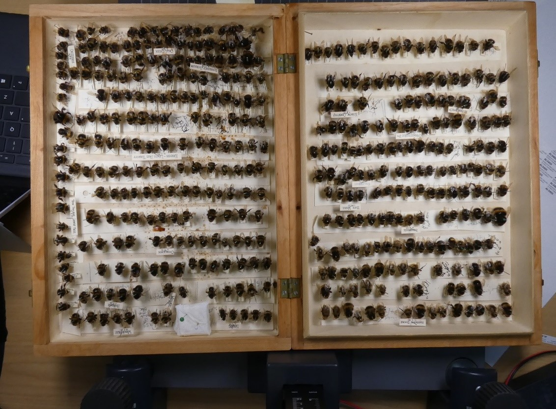 A wooden draw full of rows of bees laid out like opposing pages of an open book.