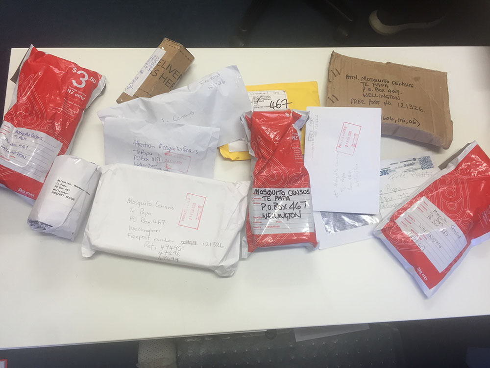 An array of parcels on a table