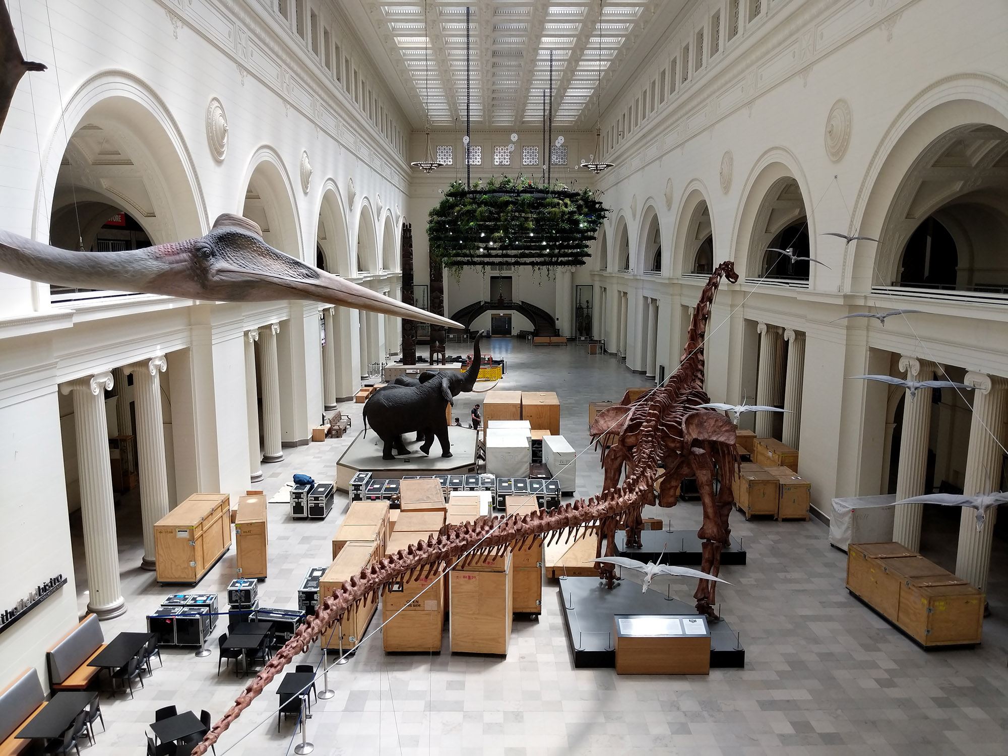 A large hall with many wooden crates in the middle, a dinosaur skeleton and an elephant statue.
