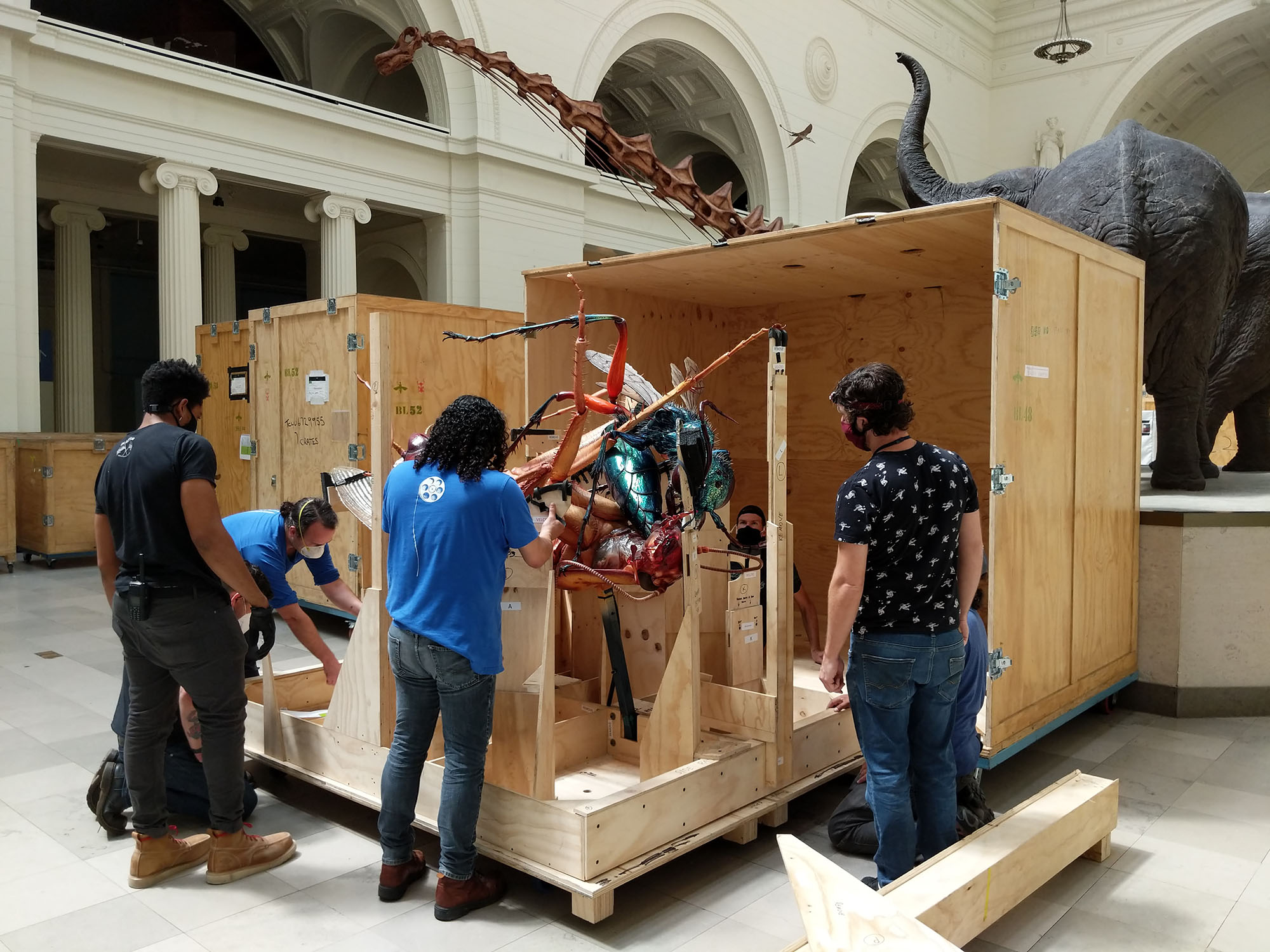 Four men place a large-scale model of two insects into a wooden crate.