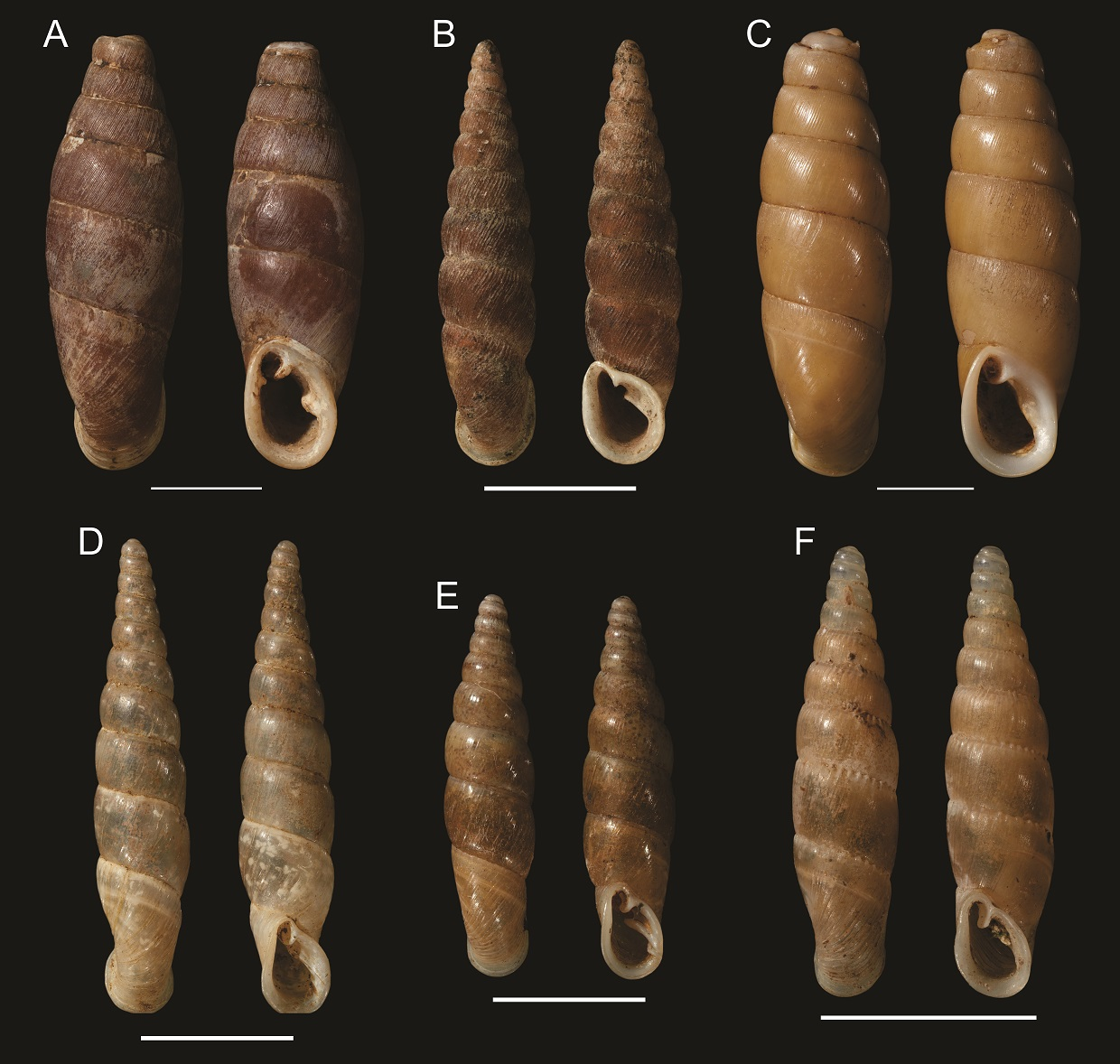 six shells lined up in rows of three with two views of each shell