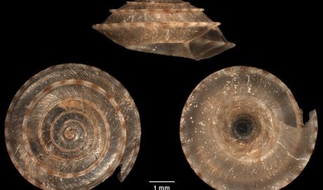 A snail shell from three angles on a black background