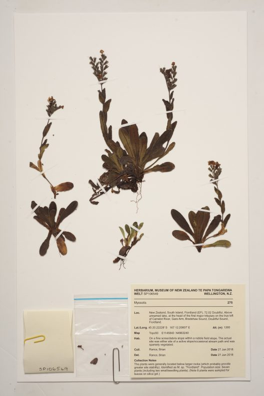 Pressed leaves and stems with notes and a plastic bag on a beige piece of card