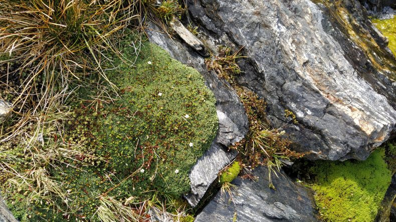 grasses and mossy mats on rocks