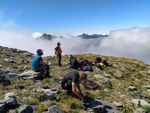 Collecting in the clouds. A surreal morning waiting for the helicopter to reappear, pick us up, and take us to the next field site in Fiordland National Park. And some of us are still botanising while we wait! 14 Feb 2020. Photo by Heidi Meudt @ Te Papa.