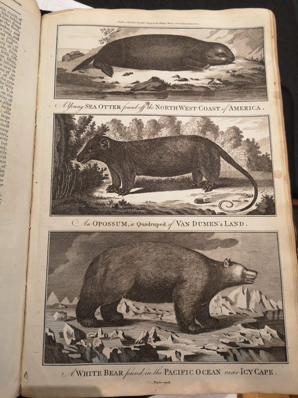 A page from an old book with three images of a seal, an opossum and a white bear