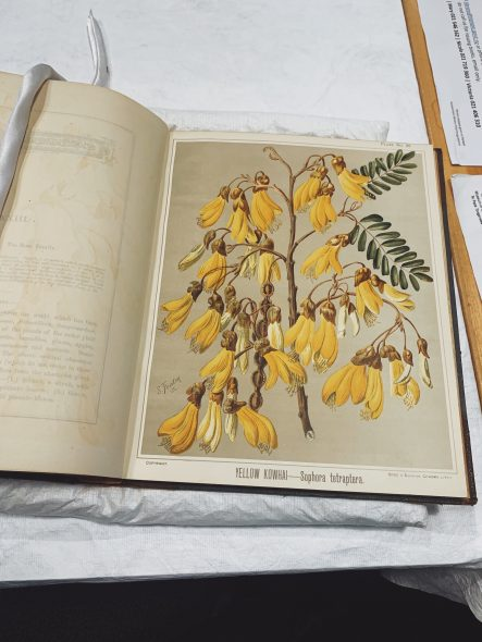 A page from a book with a painting of yellow flowers and green leaves and a seedpod
