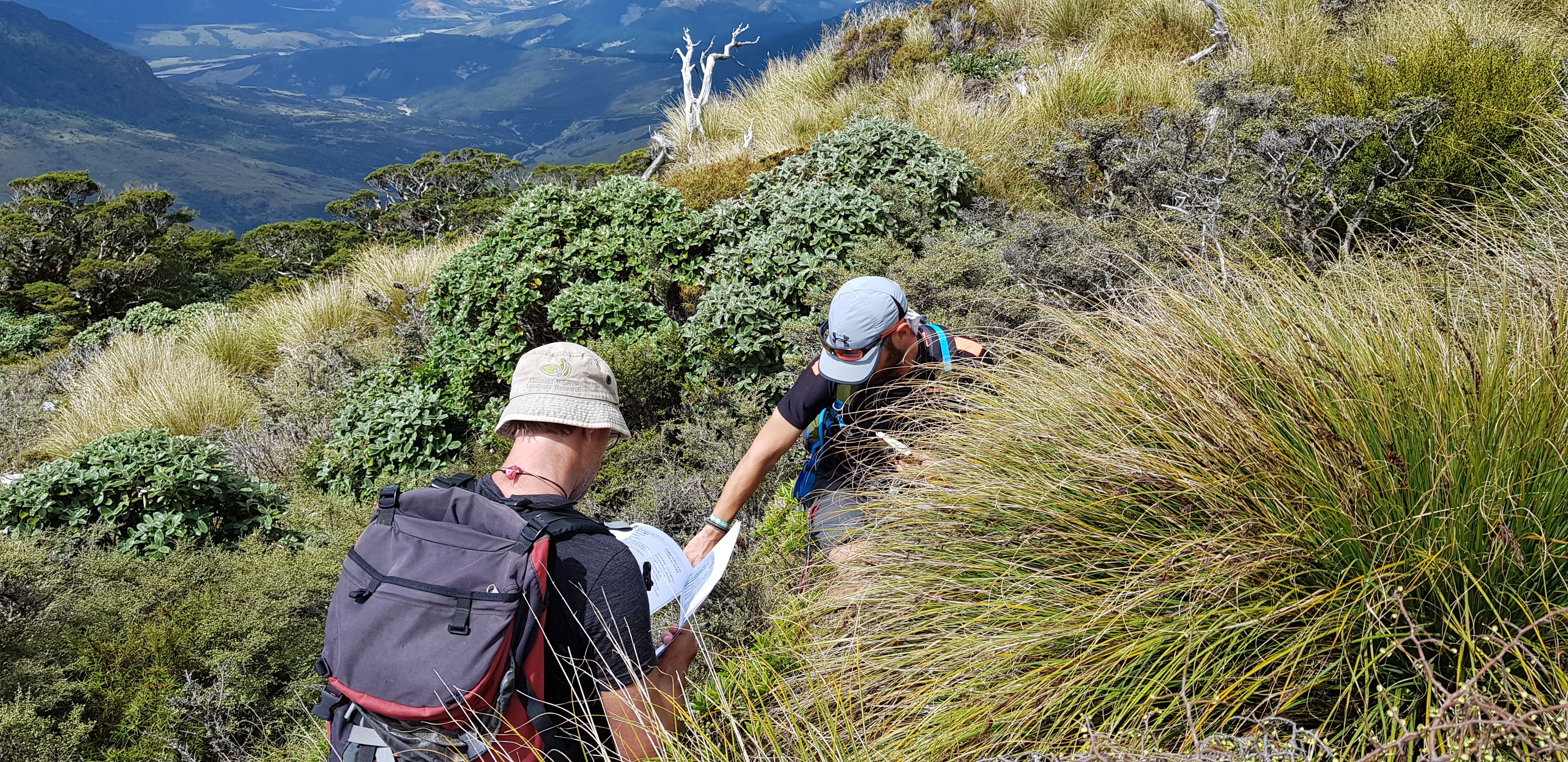 Two people crouched in the bush and long grass on the side of a mountain
