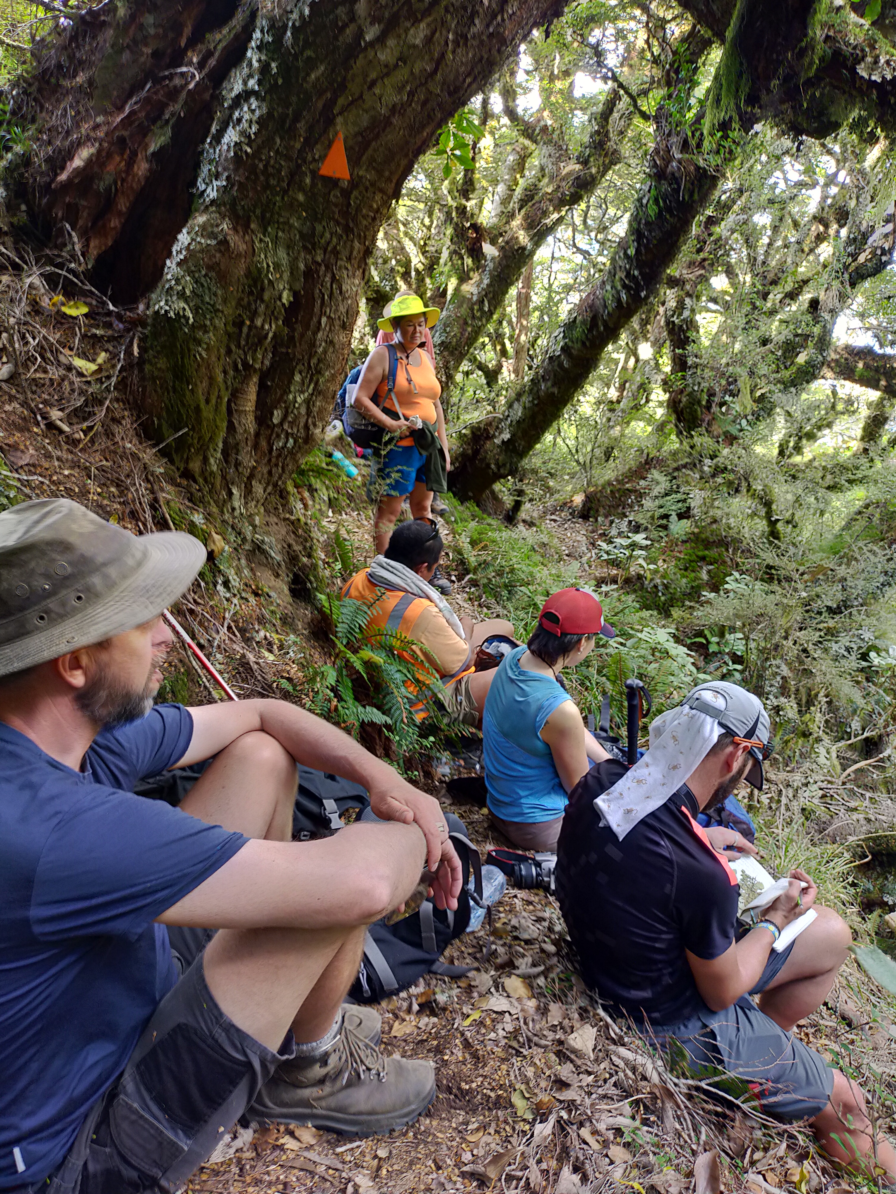 The team taking a break in a nice patch of remnant native forest above Hikurangi Hut. 30 Jan 2020. Photo by Ant Kusabs @ Te Papa.